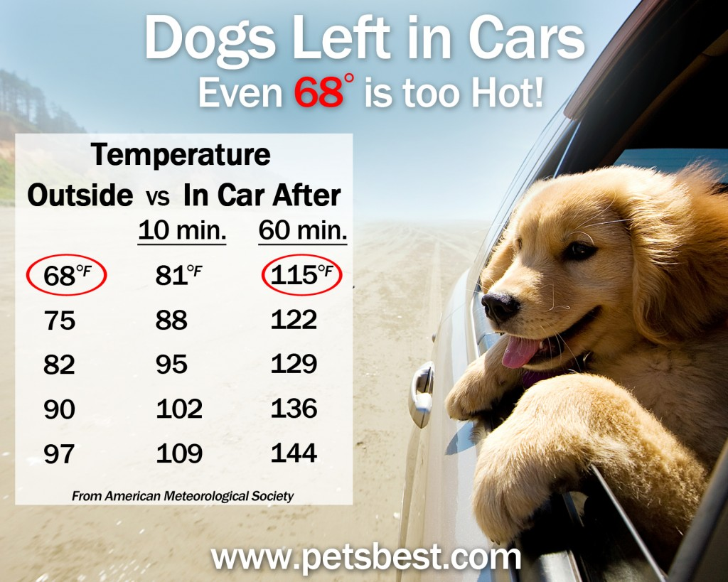 dogs_in_cars_Heat_Risks_highres_051914_CWT