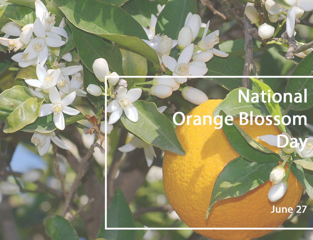 orange blossom day