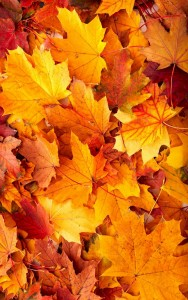 6358026914209416601429762618_fall-leaves.imgopt1000x70
