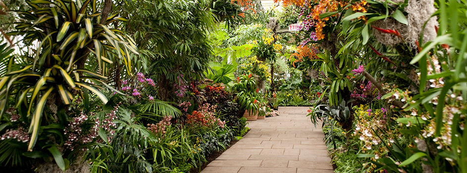 For Your Weekend The Orchid Show At Nybg Heydoyou Lifestyle Blog
